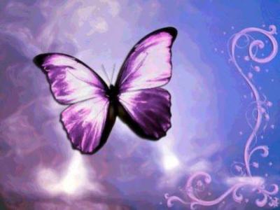 la chenille devenue joli papillon - Image De Papillon